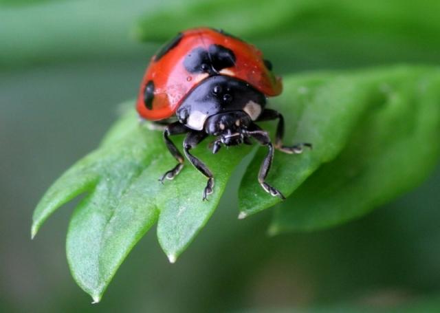 ladybug_spring_garden_671982_h